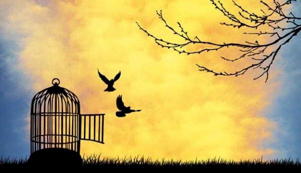Özgür Bırak Ruhunu