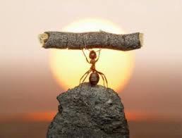 Başarıdan Ziyade Azmi Takdir Edelim